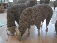 Tele_sheep