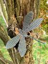 Dragonfly_grey
