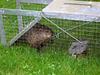 Groundhog06_1
