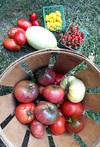 Heirloom_harvest