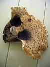 Mushroom_big