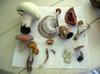 Mushroom_ident2