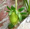 Sparkle_strawberry1